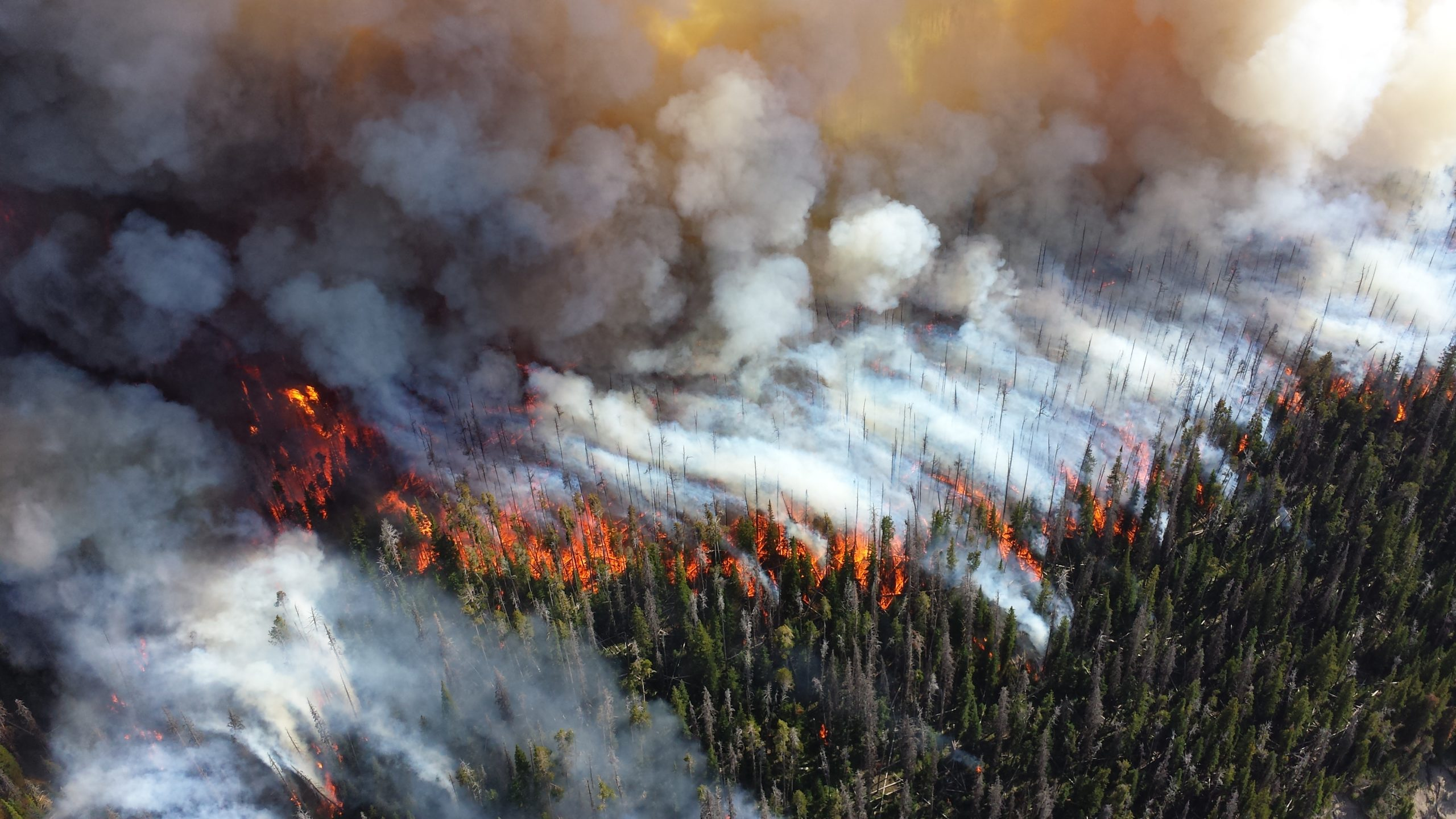 Photograph from a bird's eye view of fire spreading through a forest. The burning trees appear like candlesticks from afar, and white smoke hovers over the scene.